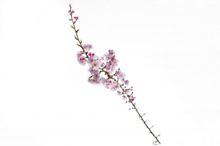 桜を撮ろう♪